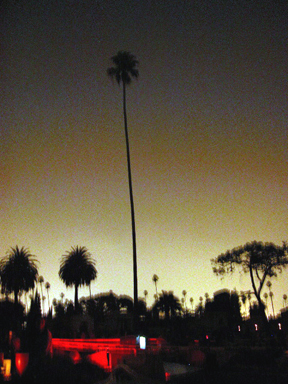 One Tall Palm